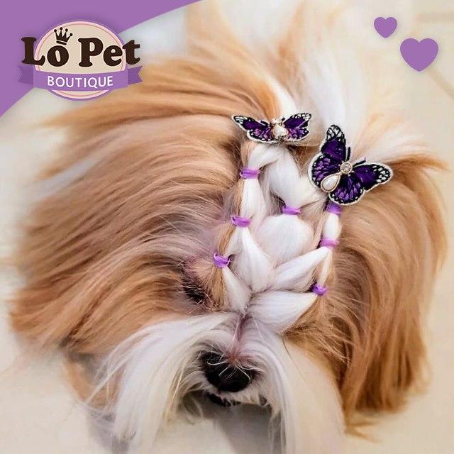 Lô Pet Tatuapé